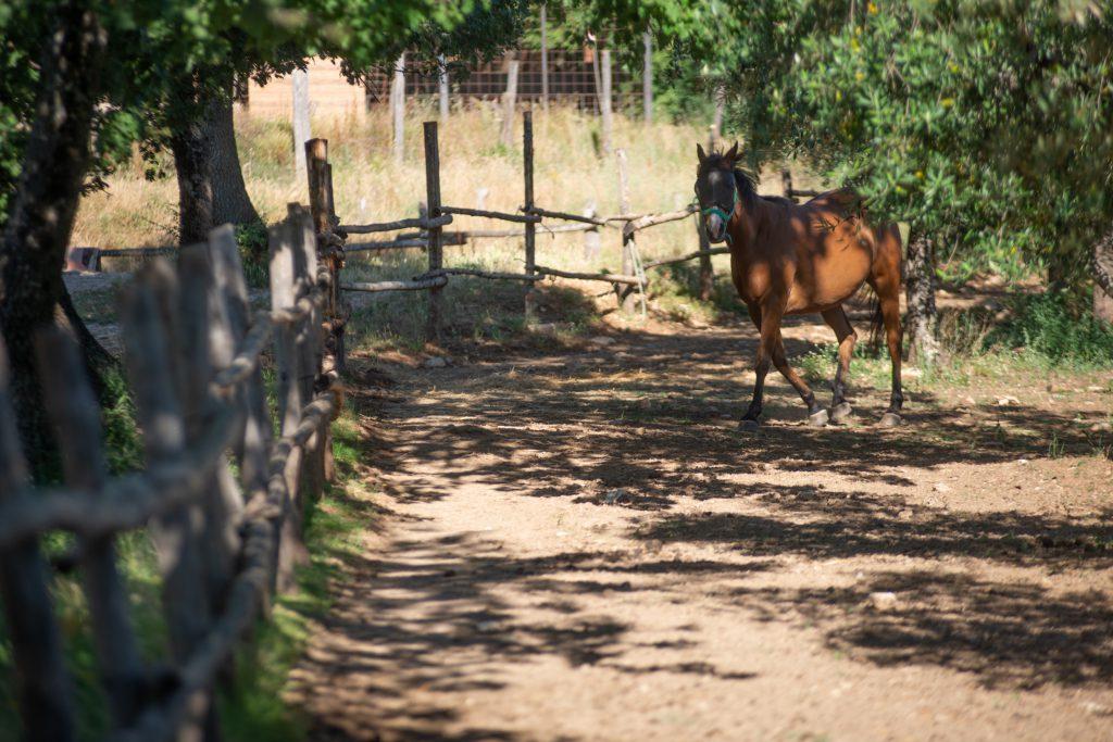 cavalli le cerqueta